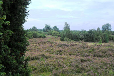Lüneburger Heide bei Amelinghausen