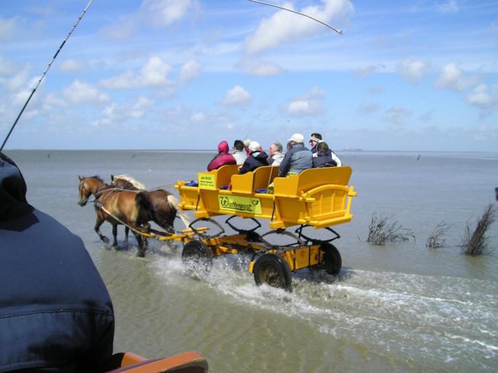 Mit dem Wattwagen zur Insel Neuwerk